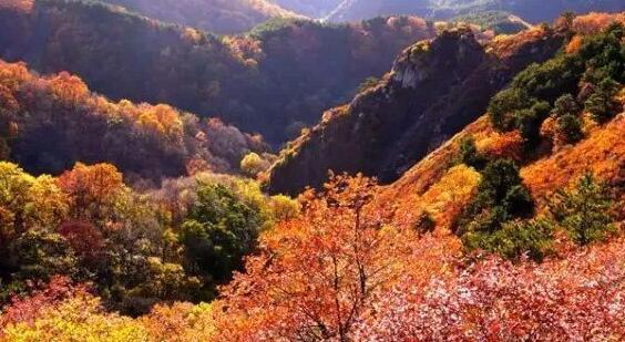中国最美红桦林-关山红桦林生态旅游度假区开发项目