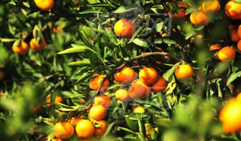 华宁县柑橘酵素产业园区项目