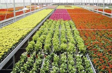 吉安县花卉苗木基地建设项目