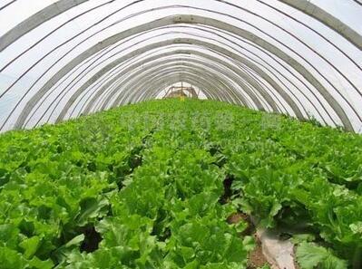 四川布拖县5000亩蔬菜大棚建设、生产、营销项目