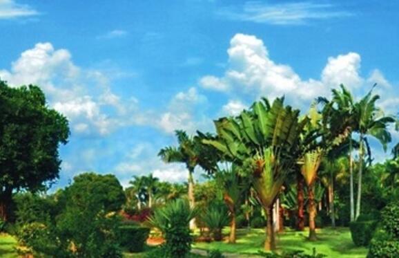 攀枝花市仁和区金沙江南亚热带植物园项目