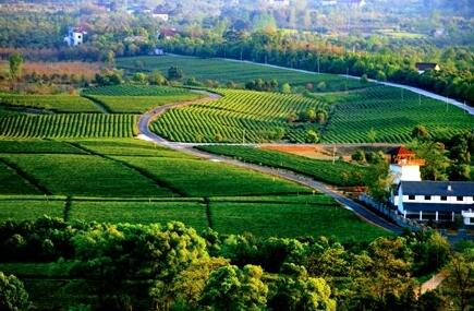 泸州市江阳区丹林镇现代休闲观光农业项目
