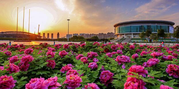 洛阳市牡丹花仙文化演艺乐园建设项目