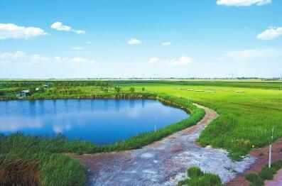 肃州湿地保护利用开发项目