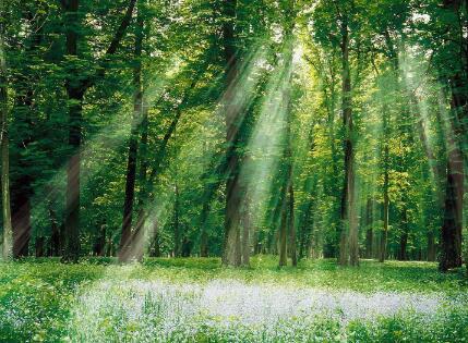 那坡县德孚森林养生度假区项目