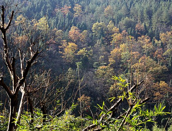 金银山森林公园开发项目