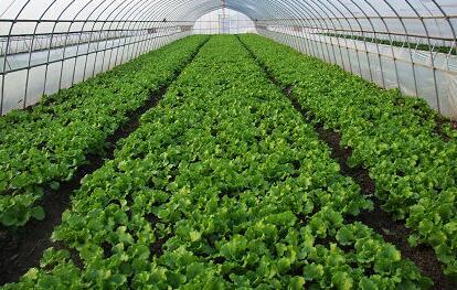 铜川市耀州区设施蔬菜生产示范基地建设项目